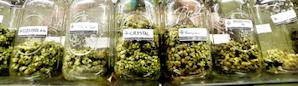 Order medical marijuana in Vegas online